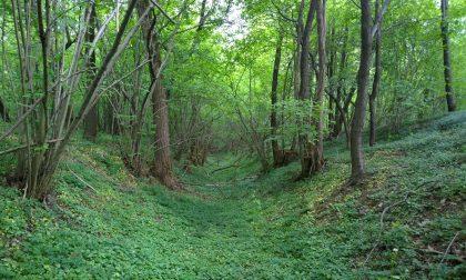 Passeggiata in compagnia per tornare a vivere i boschi della Valle