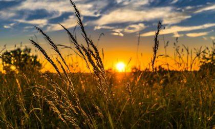 Misure per giovani e agricoltura nella Legge di Bilancio, Coldiretti soddisfatta