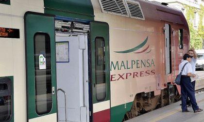 Daino investito sui binari dal Malpensa Express