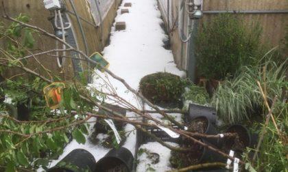 Maxi grandinata a Varese e Como: distrutti fieno, frutta, fiori e ortaggi