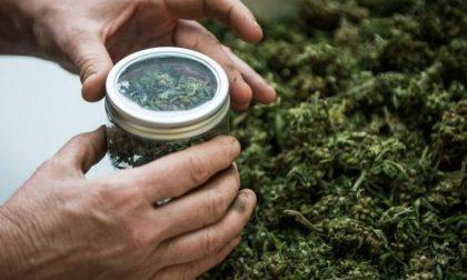 Marijuana legale: sul lago Maggiore boom di vendite