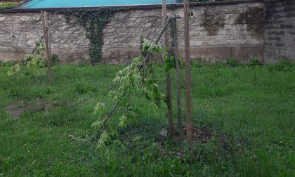 S.Vittore, vandali ai giardinetti di via Roma