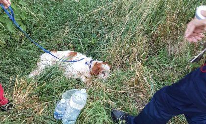 Cane investito a Castano: interviene la Polizia locale