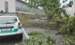 Maxi temporale crollano alberi a Cerro e Nerviano