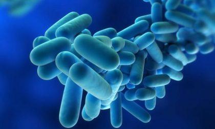 """Legionella, torna la paura in Lombardia. L'assessore al Welfare rassicura: """"Tutto sotto controllo"""""""