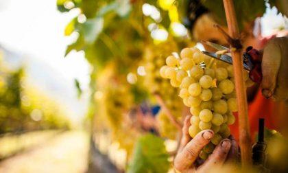 Vendita vino in Lombardia, Coldiretti soddisfatta