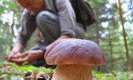 Si torna a caccia di funghi: esperti di Ats Insubria a disposizione per evitare incidenti