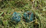 Cane avvelenato a Cerro, gli animalisti mettono una taglia sul colpevole