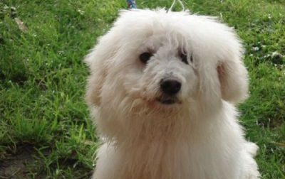 Lainate: non dormono da due anni per un cane che abbaia