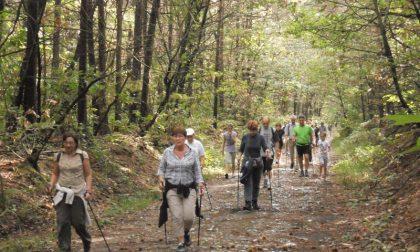 Nuovo sentiero nel Parco Pineta: fine settimana di poesia e natura a Carbonate