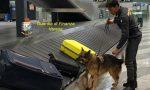 Traffico internazionale stupefacenti, sequestrati oltre 18 kg di cocaina VIDEO