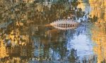 Un coccodrillo nel laghetto del parco?