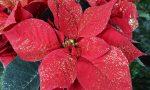 """DPCM interpretato male, stop alla vendita di piante. Coldiretti: """"Gravi danni alla floricoltura"""""""