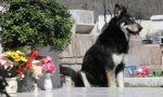 Cani e gatti, divieto d'accesso ai cimiteri di Tradate