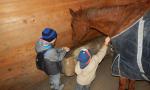 Addio a Drago, il cavallo amico del Parco degli Aironi