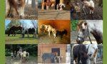 Parco degli Aironi: addio al pony Marta