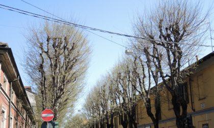 Respinto il ricorso, i bagolari di via Roma si possono tagliare. La palla passa ad Airoldi