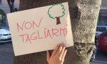 Via Roma: il Tar sospende il taglio degli alberi