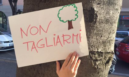 """Tagli in via Roma, il Comitato: """"Sicuri che la nuova giunta salverà il viale alberato"""""""