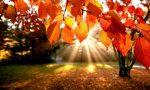 Robecchetto accoglie l'autunno: la festa