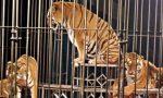 Circo a Lainate, protesta degli animalisti
