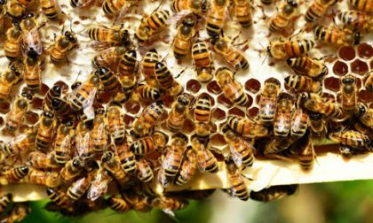 Agricoltura Varese, un sostegno agli apicoltori e produttori di miele