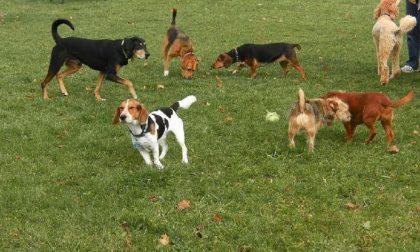 Rete danneggiata, Marnate chiude l'area cani di Nizzolina