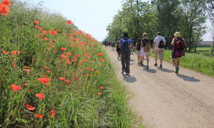 Dalla Svizzera a Pavia: rimessa a nuovo la Via Francisca del Lucomagno