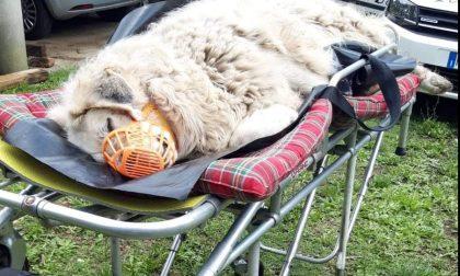 Cane abbandonato in un frigor, salvato. Aperta una raccolta fondi per le cure