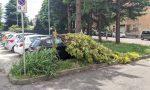 Saronno, dopo dieci giorni l'albero crollato in via Volta è ancora lì
