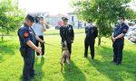 Una squadra cinofila dei carabinieri contro i bocconi avvelenati in provincia VIDEO
