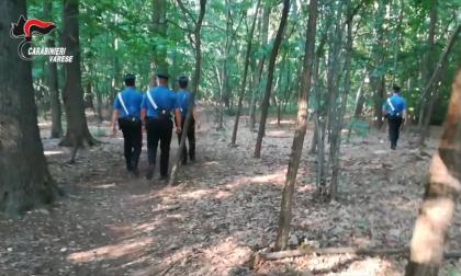 20mila euro dalla Regione per migliorare la sicurezza del Parco Pineta