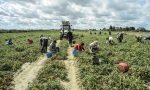 Nuovo focolaio Covid: 97 positivi in azienda agricola Mantovana
