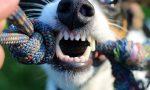 Cerca di rapirle il cane mentre passeggia al Parco Castello