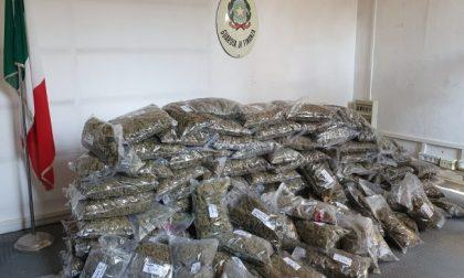 100 chili di marijuana, dalla Sardegna a Cantello: arrestato un corriere 39enne VIDEO