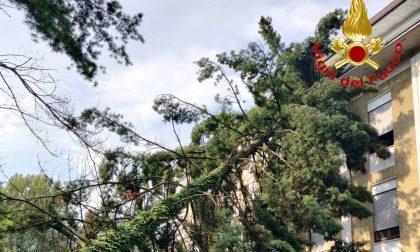 Lavena Ponte Tresa, albero crolla e finisce contro l'ex caserma