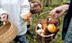 Stagione in ritardo ma parte la caccia ai funghi: i consigli di Coldiretti