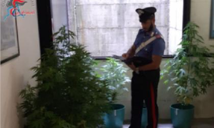 """Nove piante di marijuana in casa: denunciato un locatese e arrestato il suo """"aiutante"""""""