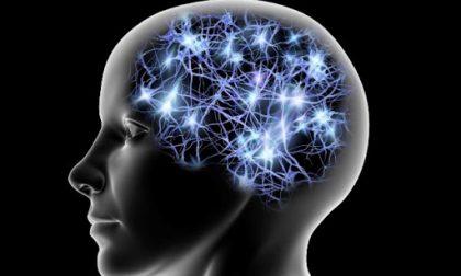 Insubria: una giornata di studio e scoperta del cervello e delle sue patologie