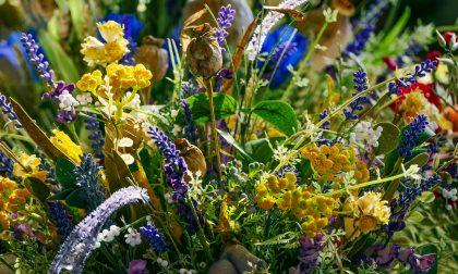 Floricoltura in crisi nera: crollo delle vendite anche a Ognissanti