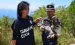 Nucleo carabinieri CITES: un anno di operazioni fra tigri, tartarughe e caccia all'avorio