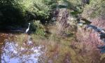 Volpi, ricci e scoiattoli fotografati al Parco del Lura FOTO