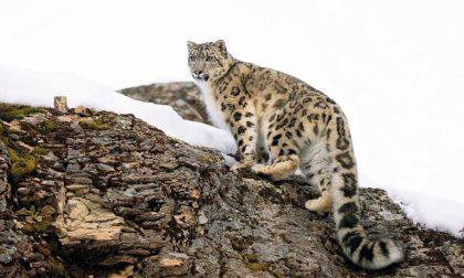 Un anno alla scoperta degli animali più rari con il Calendario CITES 2021-VIDEO