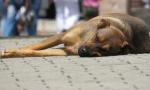 Cani maltrattati e uccisi a Cantù: oltre 6mila euro di multa al proprietario