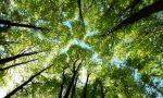 Torna nel fine settimana il BioBlitz al Parco delle Groane