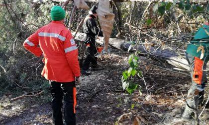 La squadra Anti Incendio boschivo al lavoro per liberare i sentieri dagli alberi caduti