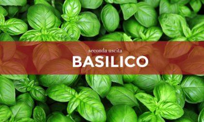 Tutti ortisti: in edicola con La Settimana di Saronno i semi di basilico
