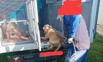 Canile lager con 500 cani a Caserta, 30 sono ricoverati a Uboldo
