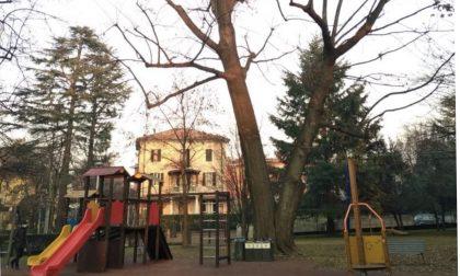 Motoseghe al lavoro al Monteruzzo: addio alla quercia rossa dell'area giochi