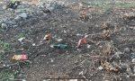"""Via gli arbusti dalla rotonda di Caronno, restano i rifiuti. Fratelli d'Italia: """"Ripulirla no?"""""""